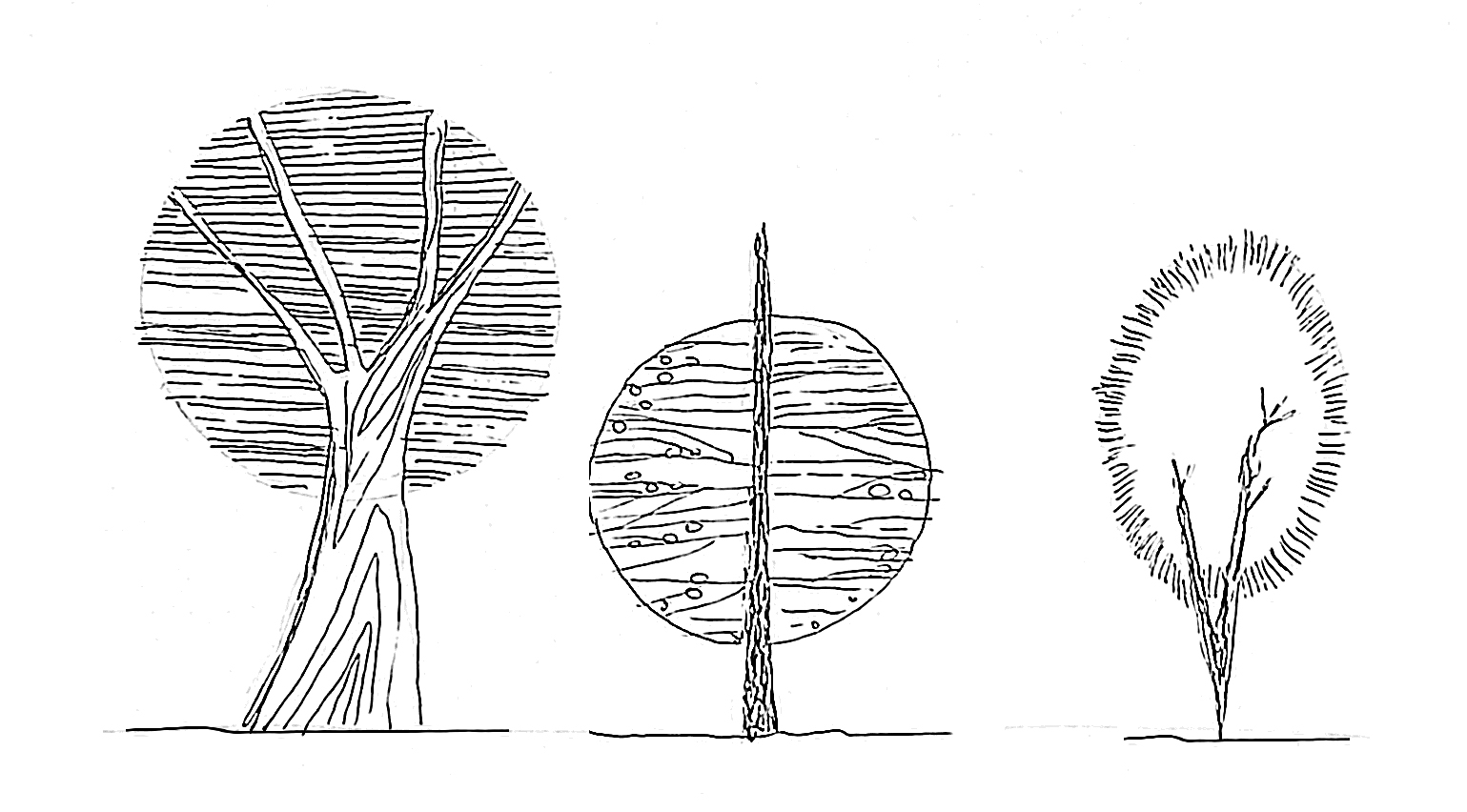 Architectural Drawing Tutorial 03 How To Draw Trees